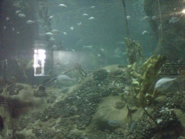 National Aquarium, Marine Parade, Napier